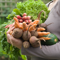 carrying vegetables